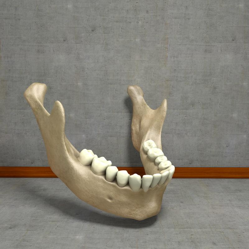 3ds max human jawbones teeth gums