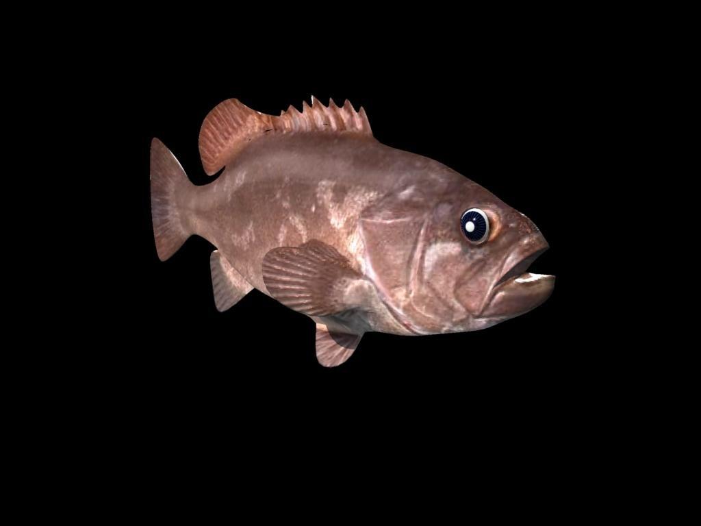 bass grouper 3d 3ds