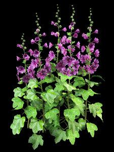 malva plant 3d model