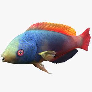 3d wrasse fish model