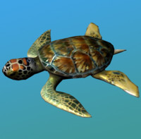 Sea Turtle(1)