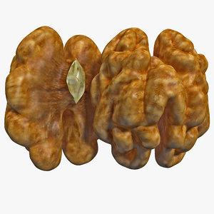 walnut kernel nut 3d model