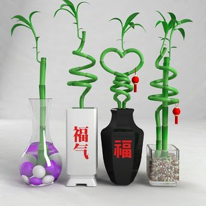 max lucky bamboo luck
