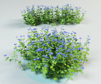 speedwell, bird's eye, gypsyweed