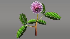 mimosa pudica 3d model