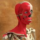 Neck 3D models