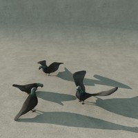 pigeons exteriors max