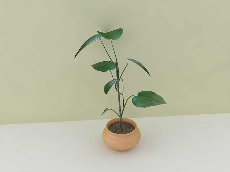 plant houseplant 3d model