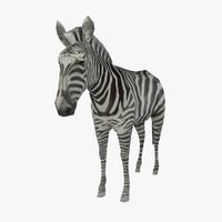 max zebra