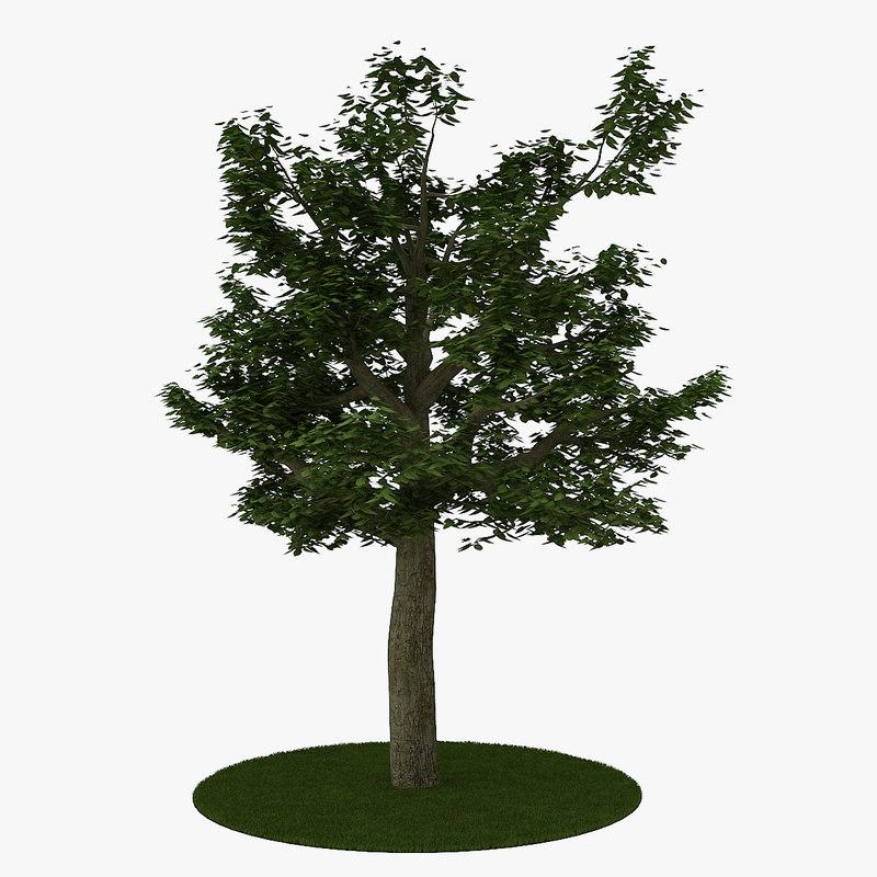 tree 8 3d max