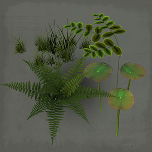 3ds max fern water
