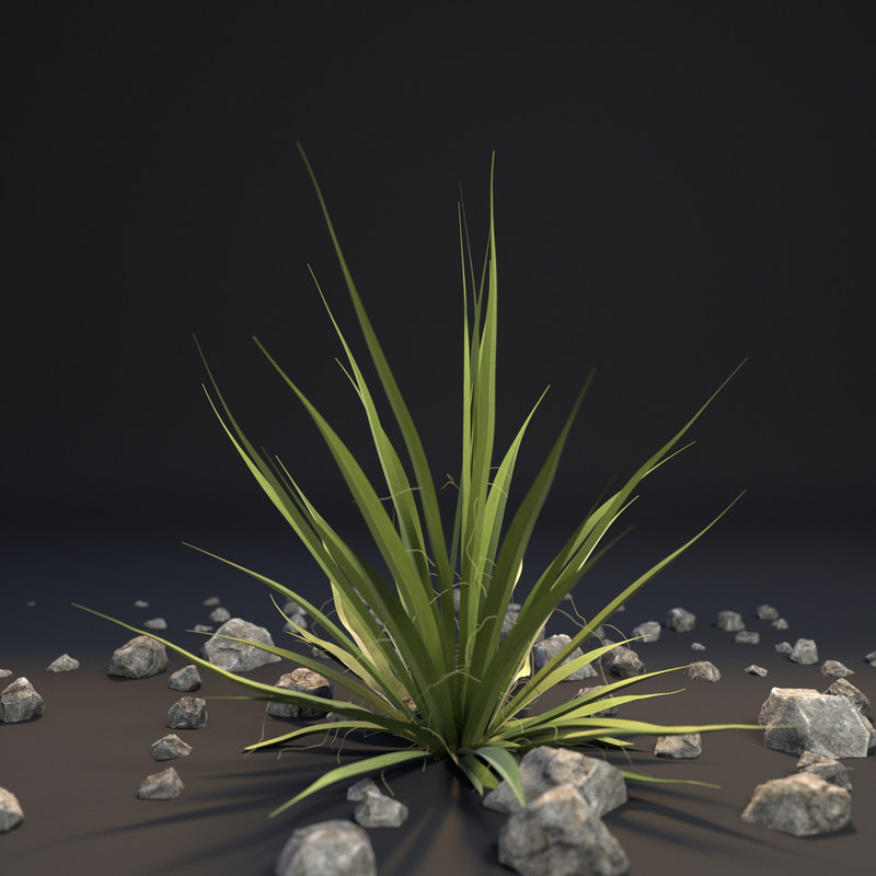 agave 3d max
