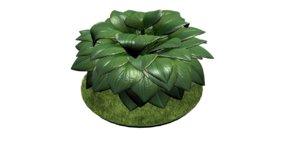 maya hosta plant