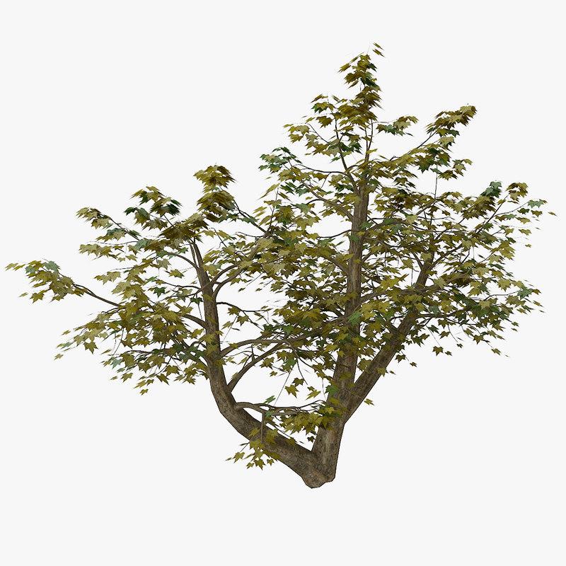 3d tree 4