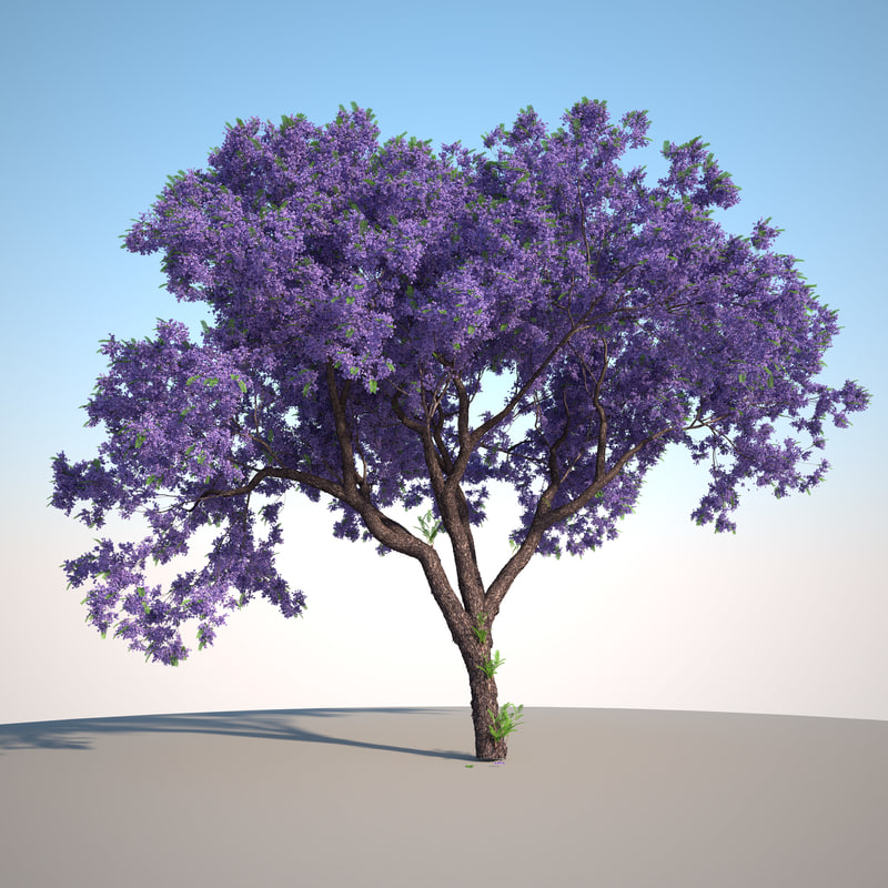 3d model jacaranda tree forest