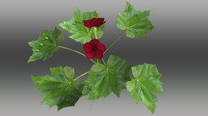 3d model begonia