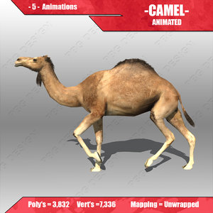 3d camel animations