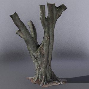 australian fig tree max