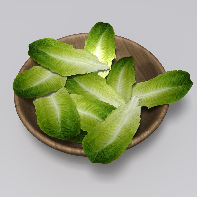 realistic lettuce leaf 3d max