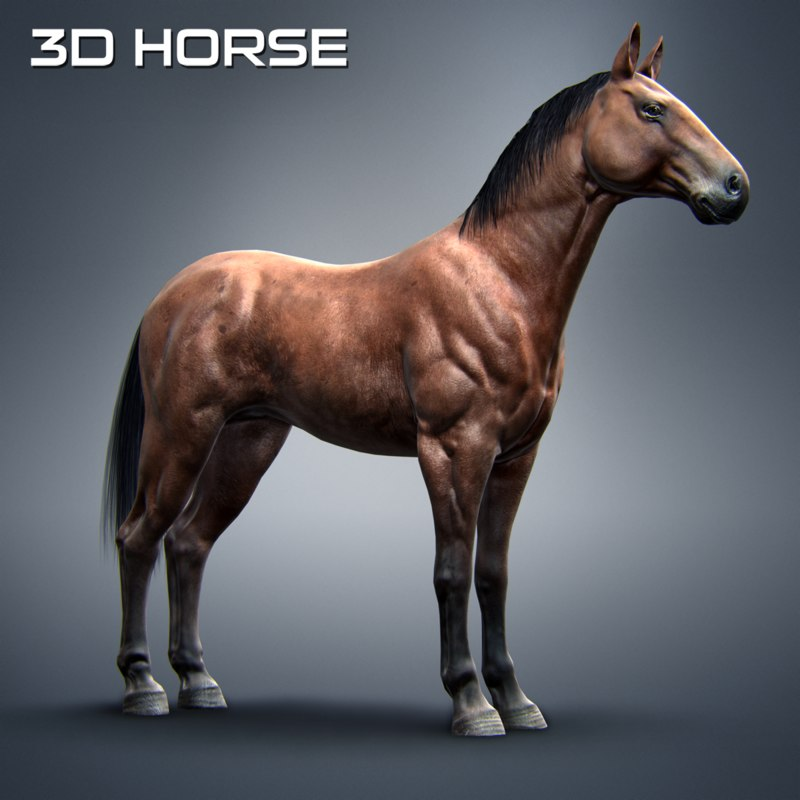 Horse By Totem Moon 3d Model American Horse