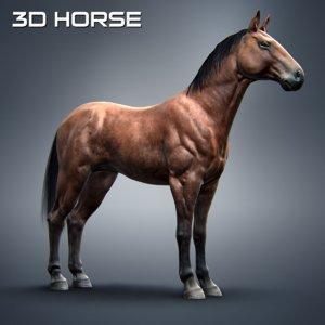 3d model american horse