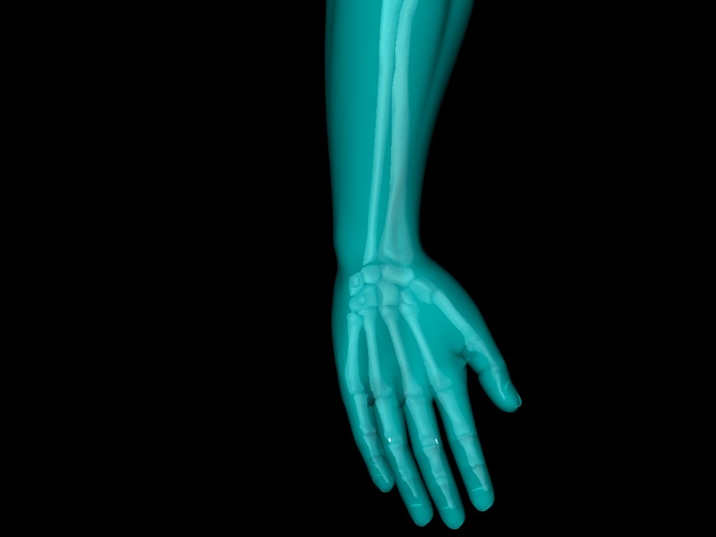c4d medically accurate x hand