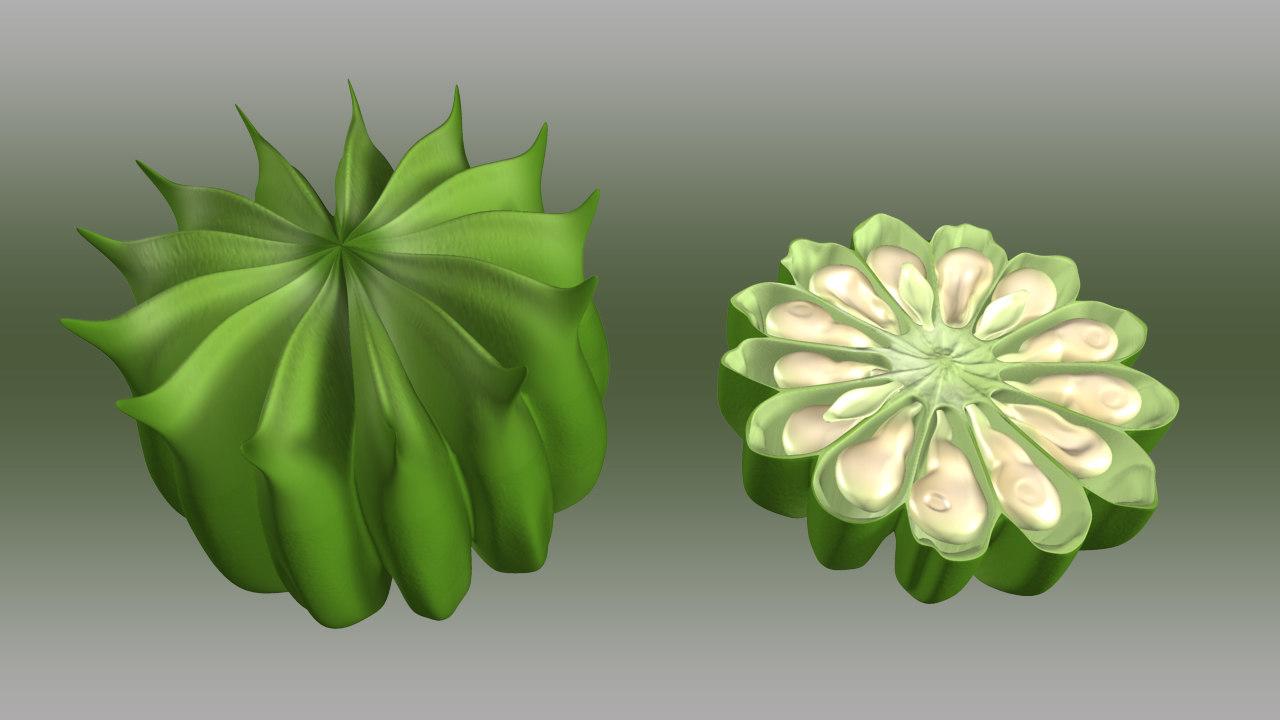 abutilon fruit obj