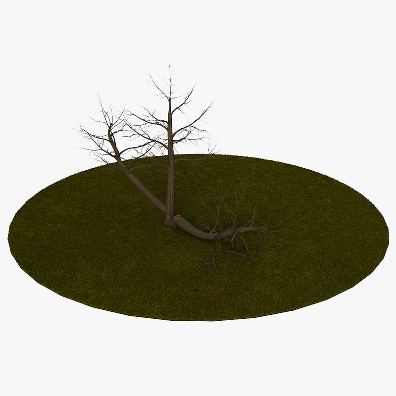 tree 5 branches 3d model