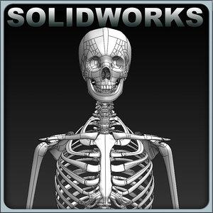 3d 3dm solidworks skeleton