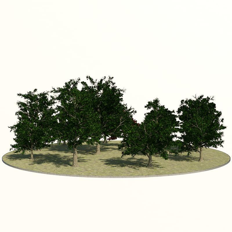 3d maple trees -