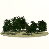 Maple Tree Bundle - Game Resolution