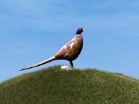 bird 3d 3ds