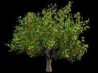 malus apple tree crabapples