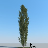 realistic poplar 3d max