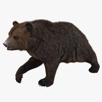 3d bear pose 2 model