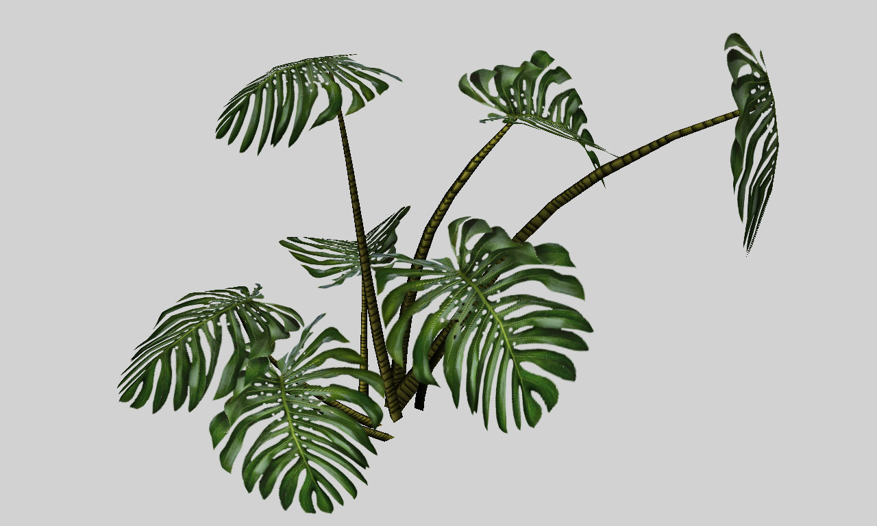 3d model of monstera tropical plant