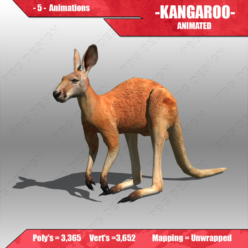 3d kangaroo animations model