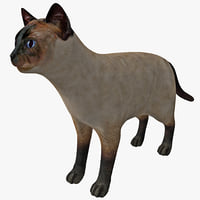 3d siamese cat model