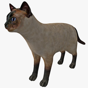 3d siamese cat model