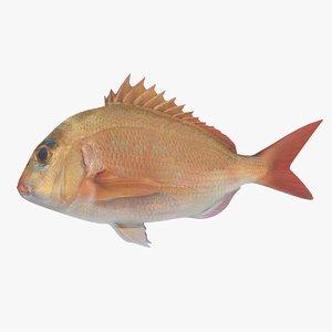 3d model snapper fish