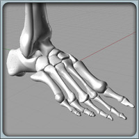 3d model of igs foot bones solidworks
