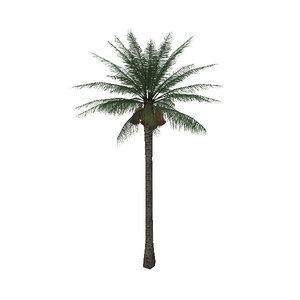 3d palm tree03