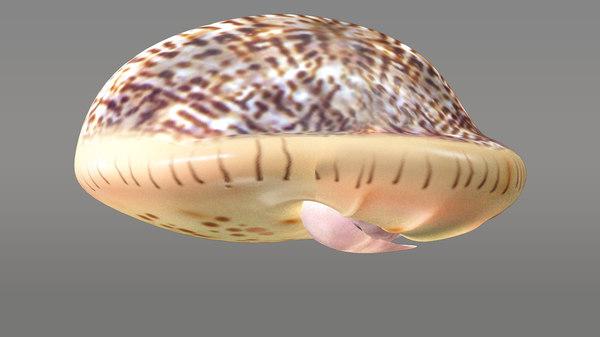 3d cypraea snails