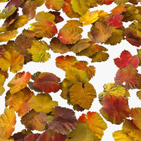 Red Yellow Colourful Wine Autumn Fall Ivy Plant Collection Set  Pile Mess