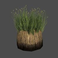 grass swamp max
