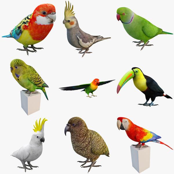 tropical bird 3d c4d