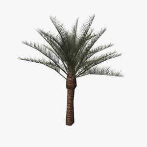 3d model palm tree02
