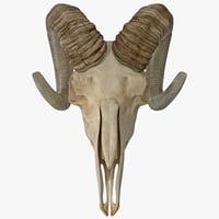 3d model goat skull 2
