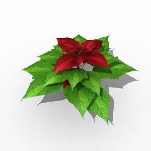 euphorbia poinsettia christmas star 3d max
