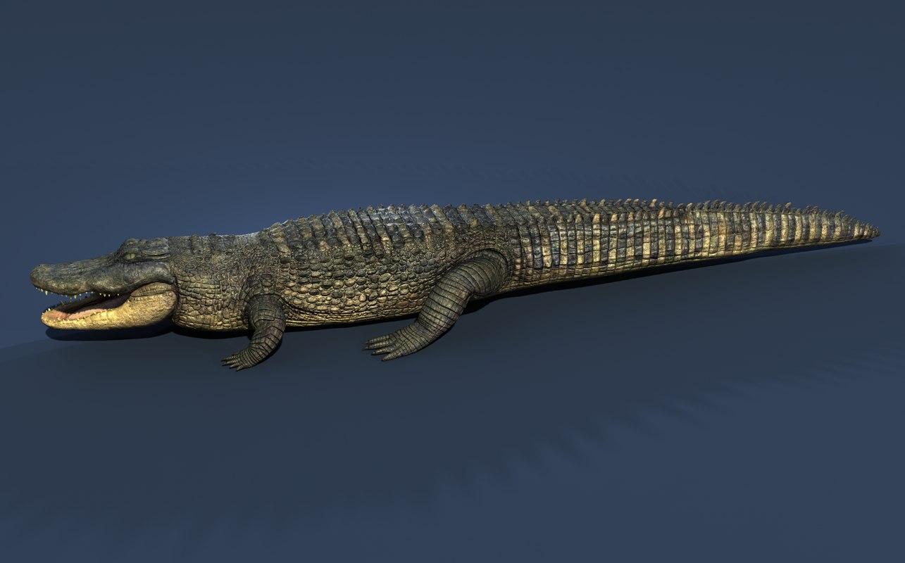 aligator alligator 3d max